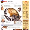 Wildlife Explorer Pack 145 - Ringtail